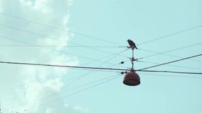 L'uccello si è appollaiato sui cavi sopraelevati con i cieli nuvolosi archivi video