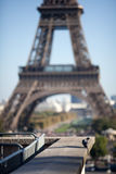 L'uccello si è tuffato vicino alla torre Eiffel Fotografia Stock