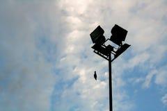 L'uccello si è tuffato volo e palo di radiodiffusione nella priorità alta Con il blu Fotografie Stock Libere da Diritti
