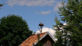 L'uccello solo della cicogna si siede in nido sul fondo del cielo blu Fotografia Stock