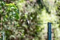 L'uccello solo su filo spinato recinta la foresta Immagine Stock