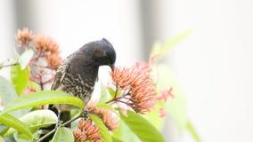 L'uccello sta mangiando fotografia stock libera da diritti