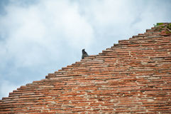 L'uccello sul vecchio tempiale rovinato immagine stock