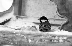 L'uccello sull'alimentatore Immagini Stock
