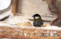 L'uccello sull'alimentatore immagine stock libera da diritti