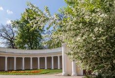L'UCRAINA, BELAYA TSERKOV: Echo Colonnade nel parco di Alexand fotografia stock libera da diritti