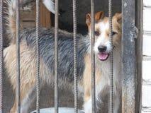 L'Ucraina, regione di Donec'k, Druzhkovka, cane triste osserva Immagine Stock Libera da Diritti