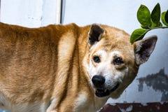 L'udienza del cane Fotografie Stock Libere da Diritti