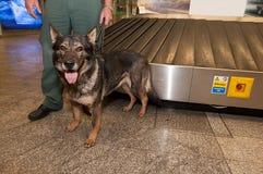 L'ufficiale della dogana e le sue droghe aspettanti del cane verificano Transferrina Immagini Stock Libere da Diritti