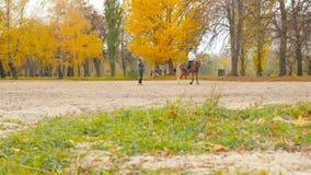 l'Ukraine, Kiev VDNH 10 cavalier 27 18 sur un cheval Une jeune fille apprend à monter un cheval banque de vidéos