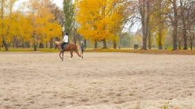 l'Ukraine, Kiev VDNH 27 10 18 l'entraîneur enseigne une fille à monter un cheval clips vidéos