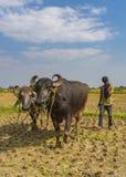 L'ultimo campo di corp in India immagine stock libera da diritti