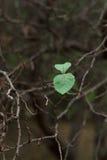 L'ultimo lascia sugli alberi nel giardino Immagine Stock