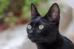 L'un gatto nero fotografia stock libera da diritti