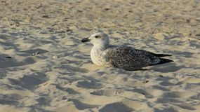 L'un oiseau marin sur Sandy Beach Freedom Of Life photo stock