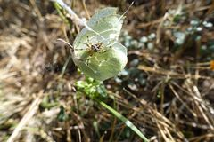 L'und Schmetterling im Otternhagener de Spinnen amarrent images libres de droits