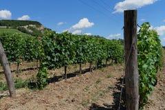 L'Ungheria - paesaggio delle vigne Tokaj Fotografia Stock Libera da Diritti