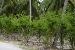 L'Union Estate, La Digue, Seychelles islands Royalty Free Stock Photo
