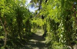 L'Union Estate, La Digue, Seychelles islands Royalty Free Stock Images