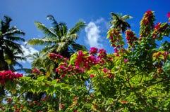 L'Unionlandgoed, La Digue, de eilanden van Seychellen Royalty-vrije Stock Afbeelding