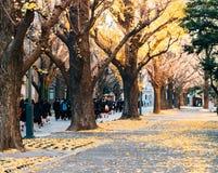L'università di Tokyo, Giappone immagini stock