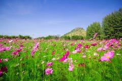 L'universo fiorisce il metà di cortile centrale A bello Fotografia Stock