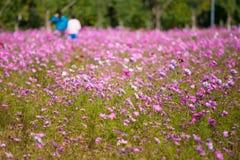 L'universo in piena fioritura al sole Fotografia Stock Libera da Diritti