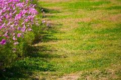 L'universo in piena fioritura al sole Fotografia Stock