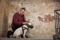 L'uomo abbottona un collare di cane contro lo sfondo di una parete della sbucciatura Ritratto dell'uomo e del bianco bull terrier Fotografia Stock