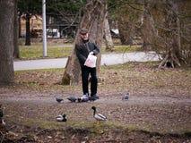 L'uomo adulto sconosciuto alimenta gli uccelli in Central Park di St Petersburg nel settembre 2017 Immagini Stock