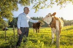 L'uomo alimenta la mucca fotografia stock