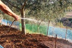 L'uomo annaffia il suolo marrone dopo la piantatura delle verdure nel giardino immagini stock libere da diritti