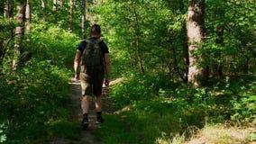 L'uomo barbuto con uno zaino sta passando con il concetto all'aperto di sopravvivenza di stile di vita di viaggio della foresta video d archivio