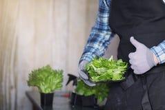 L'uomo barbuto in un grembiule ed in guanti tiene una ciotola di verde fresco s Immagine Stock