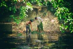 L'uomo cambogiano ed il ragazzo della gente raccolgono il fuco dell'alga del lago nel parco nazionale di Kep, Cambogia Fotografia Stock