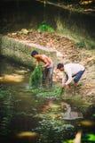 L'uomo cambogiano ed il ragazzo della gente raccolgono il fuco dell'alga del lago nel parco nazionale di Kep, Cambogia Immagine Stock Libera da Diritti