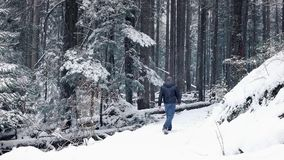 L'uomo cammina in Forest With Snow Falling video d archivio