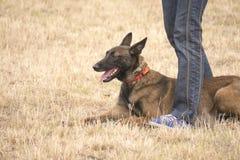 L'uomo con il suo giovane cane sta sul campo Fotografia Stock Libera da Diritti