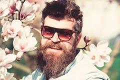 L'uomo con la barba ed i baffi indossa gli occhiali da sole il giorno soleggiato, fiori della magnolia su fondo Concetto di modo  fotografie stock libere da diritti
