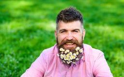 L'uomo con la barba sul fronte sorridente gode della vita senza allergia L'uomo barbuto con la margherita fiorisce in barba, fond Fotografia Stock Libera da Diritti