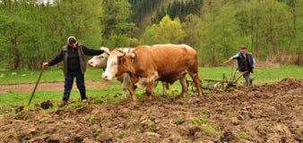 Uomo con la sua moglie che lavora la terra Immagini Stock