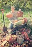 L'uomo con le verdure raccoglie in giardino Immagine Stock Libera da Diritti