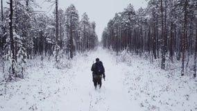 L'uomo con uno zaino cammina nella foresta nell'inverno Metraggio aereo di volo del fuco Aumento Backpacking di inverno video d archivio