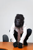 L'uomo d'affari della gorilla in camicia ed in legame si è seduto su uno scrittorio Immagine Stock