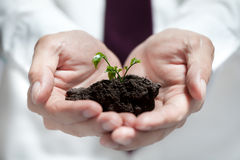 L'uomo d'affari passa la tenuta dell'albero verde Concetto di ecologia Immagine Stock Libera da Diritti