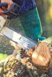 L'uomo del registratore automatico sta tagliando il legno Immagini Stock