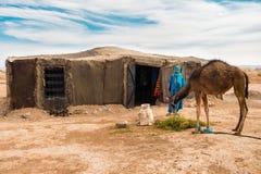 L'uomo di berbero che guarda il suo cammello mangia fotografie stock libere da diritti