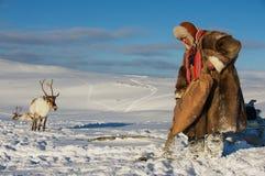 L'uomo di sami alimenta le renne nell'inverno profondo della neve, la regione di Tromso, Norvegia del Nord Fotografia Stock Libera da Diritti