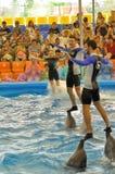 L'uomo e la donna balla sopra i delfini alla baia del ` s di Dolphine a Phuket, Tailandia Fotografie Stock Libere da Diritti