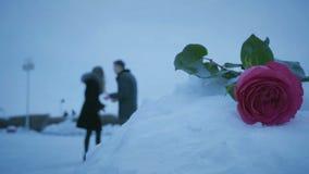 L'uomo e la donna giurano su fondo delle rose in cumulo di neve archivi video